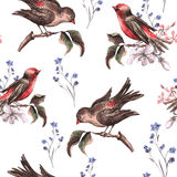 Vintage Floral Seamless Background with Birds Stock Images