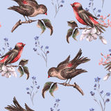 Vintage Floral Seamless Background with Birds Royalty Free Stock Image