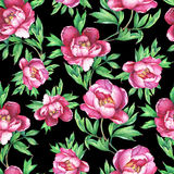 Vintage floral seamless pattern with flowering pink peonies, on  black  background. Elegance watercolor hand drawn painting illust Royalty Free Stock Image