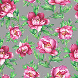 Vintage floral seamless pattern with flowering pink peonies, on gray background. Elegance watercolor hand drawn painting illustration. Isolated. Design for Stock Photography