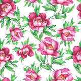 Vintage floral seamless pattern with flowering pink peonies, on white background. Elegance watercolor hand drawn painting illustra Royalty Free Stock Images