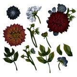 Vintage floral set. Dahlias. Set of floral decorations. vector illustration