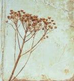 Vintage flower Stock Photo