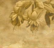 Vintage flower Stock Image