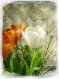 Vintage flower. Great flowers (tulips) with Victorian vintage effect Royalty Free Illustration