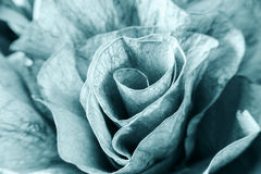Vintage flower artificial macro detail monochrome Stock Image