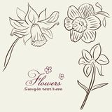Vintage Flower background Royalty Free Stock Photo