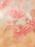 Vintage flower background stock images