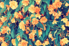 Vintage flower background Stock Photos