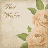 Vintage flower card with peonies Royalty Free Stock Image