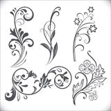 Vintage flower design elements. Stock Image