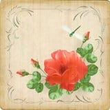 Vintage flower dragonfly retro card border frame. Vintage postcard with flower (rose), dew drops on petals, dragonfly, decorative border frame, subtle grunge Stock Photos