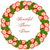 Vintage flower frame with geranium Stock Photos