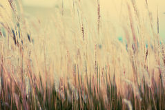 Vintage flower grass background Royalty Free Stock Photo