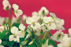 Vintage flower lawn Royalty Free Stock Images