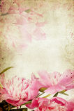 Vintage flower (peony) Stock Images