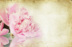Vintage flower (peony) Royalty Free Stock Photo