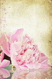 Vintage flower (peony) Royalty Free Stock Photography