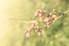 Vintage flower Stock Images