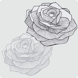 Vintage flower rose, hand-drawing. Vector illustration. Stock Photos