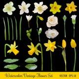Vintage Flower Set - Spring Flowers Stock Photos