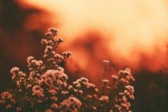 Vintage flower silhouette on sunset sunrise nature background. Vintage flower silhouette on sunset or sunrise nature background stock images