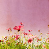 Vintage flower Royalty Free Stock Images