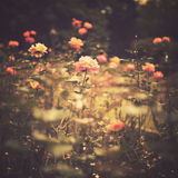 Vintage flowers stock photography