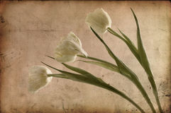 Vintage flowers Royalty Free Stock Photos