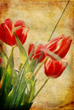 Vintage flowers stock images