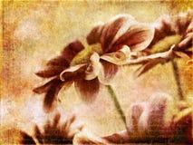 Vintage flowers Stock Image