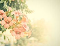 Vintage flowers. Antique style photo of tree flowers with grunge old paper pattern Royalty Free Stock Image
