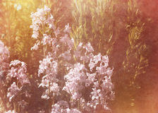 Vintage flowers background Stock Photography