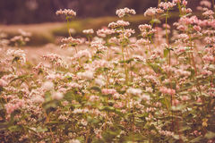 Vintage flowers. Beautiful flowes field with a vintage looking Stock Images