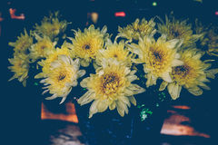 Vintage flowers blooming,yellows flowers Stock Photo