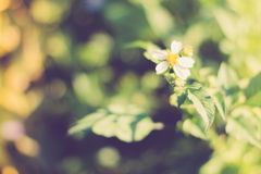 Vintage Flowers Royalty Free Stock Photography