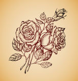 Vintage flowers. Hand drawn retro sketch flower rose. Vector illustration Royalty Free Stock Images