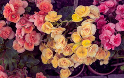 Vintage Flowers. Vintage nature backgrounds Stock Image