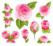 Vintage flowers set. Pink roses and buds. Wedding flowers bundle. Flower collection of watercolor detailed hand drawn stock illustration