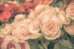 Vintage Flowers Royalty Free Stock Image