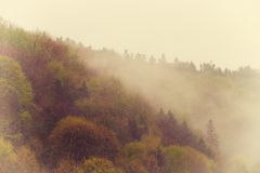 Vintage foggy landscape, forest with clouds Stock Photography