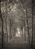 Vintage forest Stock Photos