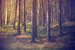 Vintage forest background. Autumn in forest, vintage look Stock Photo