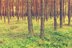 Vintage forest background Stock Photo