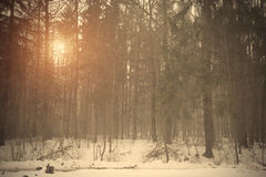 Vintage forest background Royalty Free Stock Photography
