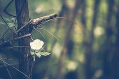 Vintage Forest Flower imagens de stock