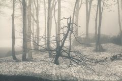 Vintage forest Royalty Free Stock Photos