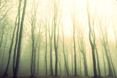 Vintage forest. Stock Photos