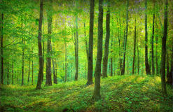 Vintage  forest photo Stock Photography