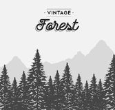 Vintage forest text label on winter tree landscape Royalty Free Stock Photography